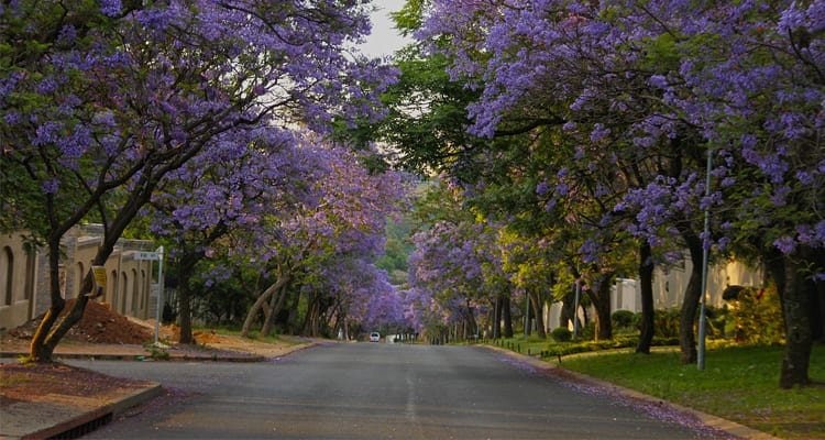 Property Investment in South Africa: Bryanston